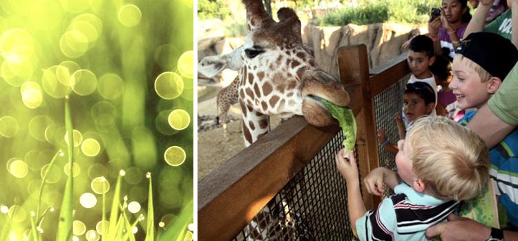Последствия сцены жестокости для зрительных детей в зоопарке Копенгагена
